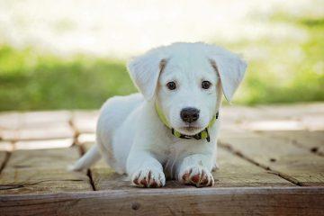 פוליש לרצפה- שיטת אילוף כלבים מצוינת?
